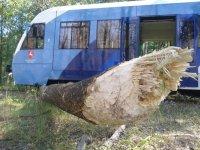 Sobibór - szynobus wykolejony przez bobry