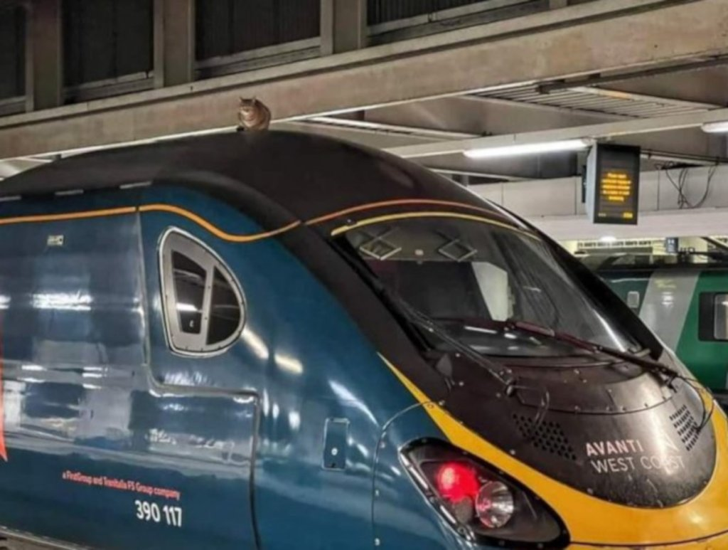 Kot na dachu pociągu do Manchesteru na stacji London Euston